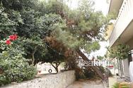Δέντρο πέρασε ξυστά από μικρά παιδιά στην Κρήτη
