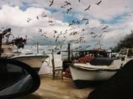 Ένα σπάνιο ντοκιμαντέρ για τις Αλυκές - Το γραφικό ψαροχώρι της Δυτικής Αχαΐας (video)