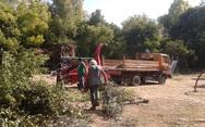Οικολογική Δυτ. Ελλάδα: Να μην αναβληθεί η επιδότηση θρυμματιστών στην δεντροκαλλιέργεια