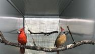 Σπάνια και εξωτικά πτηνά γεννιούνται και μεγαλώνουν στην Αττική