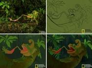 Φωτογραφίες του National Geographic μετατρέπονται σε αξιολάτρευτες εικονογραφήσεις!