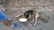 Πάτρα - Δηλητηρίασαν δύο σκυλιά και μία γάτα στο Δασύλλιο!