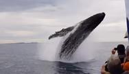 Φάλαινα επιφύλασσε σε ανθρώπους μια εμπειρία ζωής! (video)