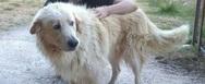 Καλάβρυτα: Πυροβόλησαν ποιμενικό σκύλο στο κεφάλι στην Ζαχλωρού