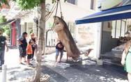Αγρίνιο: Ο τεράστιος καρχαρίας που πιάστηκε ανοικτά της Κεφαλονιάς (φωτο)