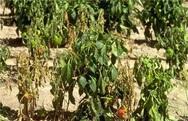 Δυτική Αχαΐα: Ελάχιστα τα χωράφια που έχουν σπαρθεί από τους αγρότες - παραγωγούς