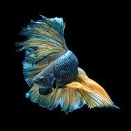Φωτογραφίζοντας πολύχρωμα ψάρια!