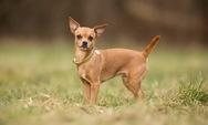 Καταγγελία - Σκυλάκι δέχτηκε δολοφονική επίθεση στην Πάτρα