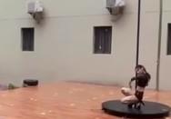 Κίνα: Έφεραν pole dancer για την έναρξη της σχολικής χρονιάς (video)
