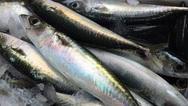 Κατασχέθηκαν τριάντα τρία κιβώτια αλιευμάτων από την Ιχθυόσκαλα Πατρών