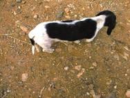 Ηλεία - Είχε αφήσει τους... 25 σκύλους του να ζουν σε άθλιες συνθήκες