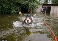 ΗΠΑ - Εθελοντές σώζουν 6 σκυλιά που κινδύνευαν να πνιγούν (video)
