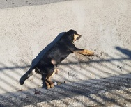 Πάτρα: Σκυλιά πεθαίνουν από φόλες ή Ι.Χ., καθημερινά στη μέση του δρόμου!