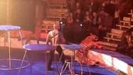 Τίγρης κατέρρευσε σε τσίρκο (video)
