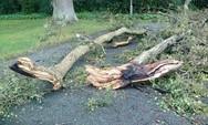 Πάτρα: Πτώση δέντρου στην περιοχή του ΑΤΕΙ