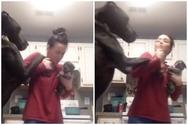 Όταν ένας σκύλος ζηλεύει... ένα κουτάβι (video)