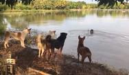 Μια ξεκαρδιστική φάρσα σε τέσσερα σκυλιά (video)