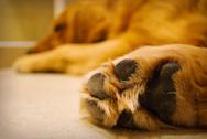 Αγρίνιο: Σκύλος πέθανε από δηλητηριασμένη τροφή