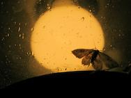 Γιατί τα έντομα πετούν προς στις λάμπες;
