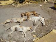 Δύο κρούσματα θανάτωσης σκύλων στην Αιτωλοακαρνανία