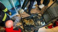 Γαλλία: Λιονταράκι βρέθηκε σε διαμέρισμα στο Παρίσι