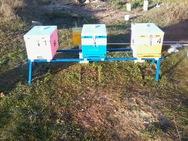 Δυτική Αχαΐα - Άγνωστοι αφαίρεσαν από χωράφι στον Αλισσό, δύο μελισσοκυψέλες