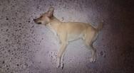 Πρόστιμο 30.000 ευρώ σε 27χρονο για θανάτωση σκύλου στη Βάρδα Ηλείας