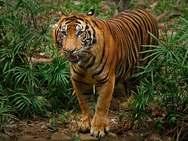 WWF: Xάνεται ο πληθυσμός τον άγριων ζώων