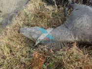Αποτροπιασμός στον Έβρο: Πυροβόλησαν και σκότωσαν άγρια άλογα