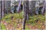 Το δάσος που... «αναπνέει» (video)