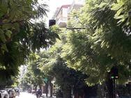 Ο δρόμος με τα δέντρα στην Πάτρα (pics)