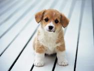 Κλεμμένο σκυλάκι βρέθηκε 483 χιλιόμετρα μακριά από το σπίτι του!