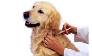 Ο Πανελλήνιος Κτηνιατρικός Σύλλογος για τα αντιβιοτικά