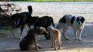Πάτρα: Μπαράζ επιθέσεων από αδέσποτους σκύλους στους χώρους της Πανεπιστημιούπολης