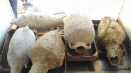 Λέρος: Ψάρεψαν αρχαίους αμφορείς