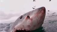 Τρομακτικές επαφές με καρχαρίες που καταγράφηκαν (video)