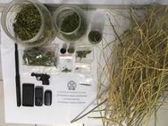 Χειροπέδες σε τρία άτομα για κατοχή και καλλιέργεια ναρκωτικών στα Τριζόνια