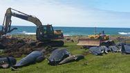 Ακόμη 50 νεκρά μαύρα δελφίνια σε ακτή της Νέας Ζηλανδίας