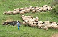 Όλο και περισσότεροι μετανάστες γίνονται κτηνοτρόφοι