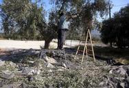 Αχαΐα: Άνδρας έπεσε από ελιά δύο μέτρων και τραυματίστηκε