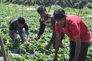 Έρευνα - Τι βιώνουν οι μετανάστες εργάτες στον αγροτικό τομέα σε Ελλάδα, Ισπανία, Ιταλία
