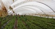 Η αδήλωτη εργασία κυριαρχεί στον αγροτικό τομέα - Το φαινόμενο στην Δυτική Ελλάδα