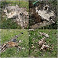 Πάτρα: Ένοχοι σε πρώτο βαθμό η επιχείρηση και ο ιδιοκτήτης του πάρκου - κολαστήριου ζώων
