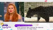 Έτσι δραπέτευσαν τα τζάγκουαρ από το Αττικό Ζωολογικό Πάρκο! (video)