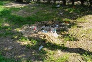 Πάτρα: Η όαση πρασίνου που έγινε 'κόλαση' για τους κατοίκους του Σκαγιοπουλείου (pics)