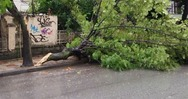 Πάτρα: Πτώση δέντρου σε κεντρικό δρόμο