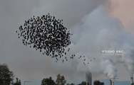 Ναύπλιο: Εντυπωσιάζουν τα ψαρόνια με τον χορό τους (pics+video)
