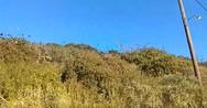Σμήνος από ψαρόνια πάνω από το Καστρίτσι της Πάτρας - Δείτε βίντεο