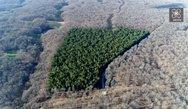 'Στα μονοπάτια των Κενταύρων' - Tο 'μυθικό' δάσος της Δυτικής Ελλάδας που σαγηνεύει (video)