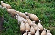Αχαΐα: Συγκροτήθηκε σε Σώμα η κεντρική διοίκηση του Αγροτοκτηνοτροφικού Συλλόγου Ερυμάνθου